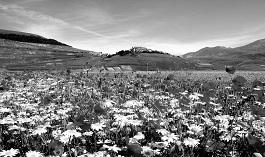 Castelluccio di Norcia - prossimamente